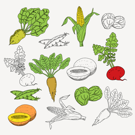 Vegetarian food set. Vegetarian menu set. Vegetables and diet, fresh and fruit. Vector illustration. LIne and cartoon illustration / graphic or web design layout. Stock Vector - 65733137
