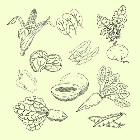 손으로 그린 정원 및 필드 야채와 과일의 컬렉션입니다. 수프, 샐러드 및 기타 요리를위한 허브. 채식 메뉴 설정합니다. 선형 스타일. 흰색 배경에 고립. 벡터. 스톡 콘텐츠 - 65733138