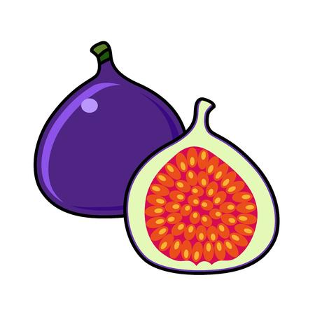 Fig on a white background. Fig sliced. fig illustration. fig vector. fig poster. fig vector illustration. Иллюстрация