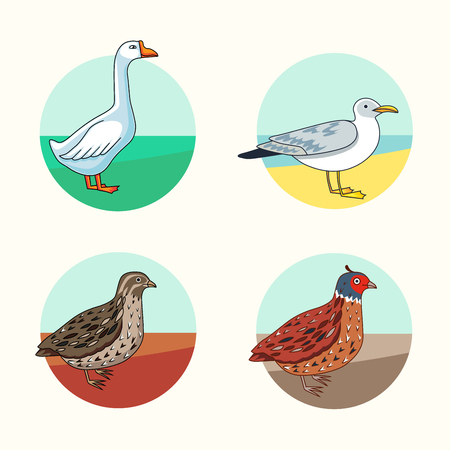 Het verzamelen van verschillende soorten vogels. De Kwartels van Californië. Gans. Zilvermeeuw. Cartoon stijl. Moderne vector illustratie voor web of print te gebruiken. Stock Illustratie