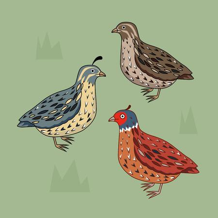 Kolekcja z różnych rodzajów przepiórki. California Przepiórka. Niebieski ptak. Brązowy ptak. Jasny ptak. Cartoon styl. Pojedynczo na zielono.