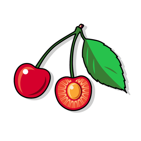 ripe: Cherry on a white background. Cherry illustration. Cherry vector. Cherry poster.