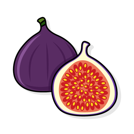 Fig on a white background. Fig sliced. fig illustration. fig vector. fig poster. fig vector illustration. Ilustração
