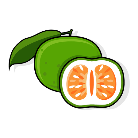 Green Grapefruit, Jaffa Sweetie. Oroblanco, Vector illustration,