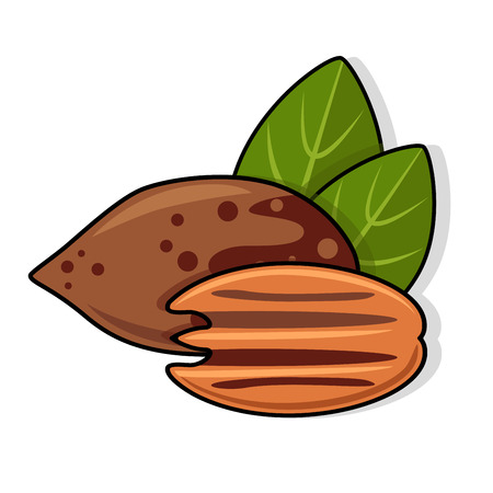 Pecan nuts with leaves. Still life composition, consisting of peeled half pecan nuts and one nut in the nutshell with green leaves. Vector illustration,