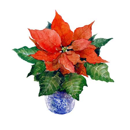 흰 배경에 고립 수채화 크리스마스 꽃 스톡 콘텐츠