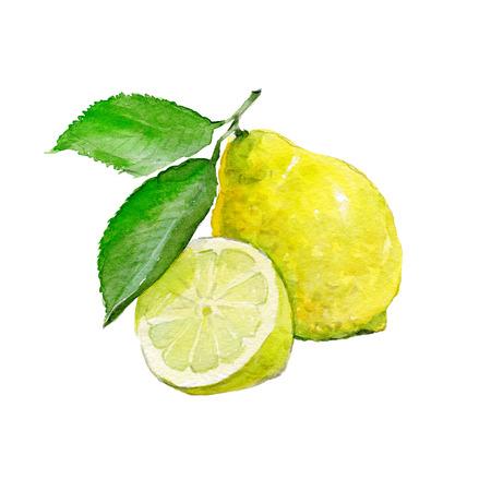 흰색 배경에 수채화 레몬입니다. 얇게 썬 과일 ??