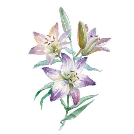 수채화 릴리 꽃다발 흰색 배경에 고립입니다. 스톡 콘텐츠