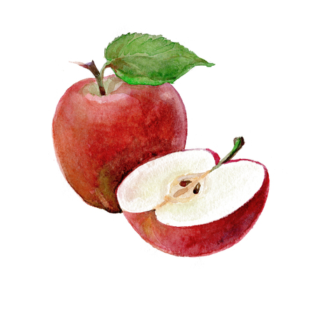 Watercolor Apples on a white background. Sliced ??fruit. Peeled half apple.