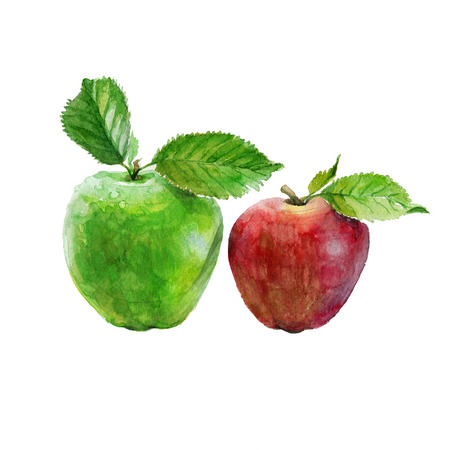흰색 배경에 수채화 사과입니다. 빨강 및 녹색 사과 그림입니다.