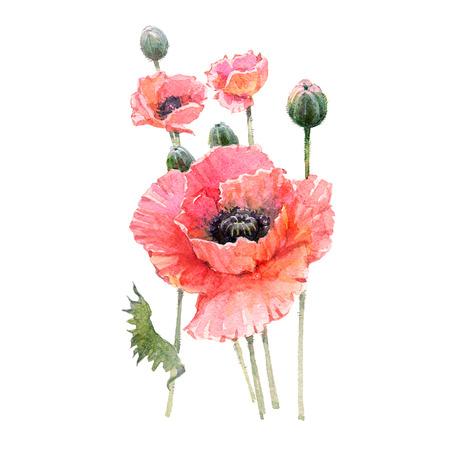 빨간 양 귀 비 꽃 꽃다발 흰색 배경에 고립.