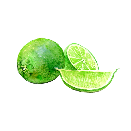 Watercolor lime with sliced ??parts isolated on a white background illustration. Imagens