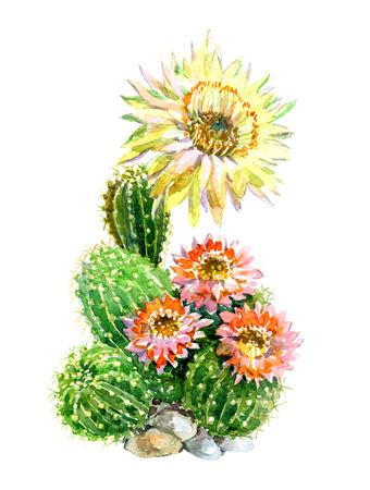 꽃과 함께 냄비에 수채화 선인장 흰색 배경 그림입니다. 스톡 콘텐츠