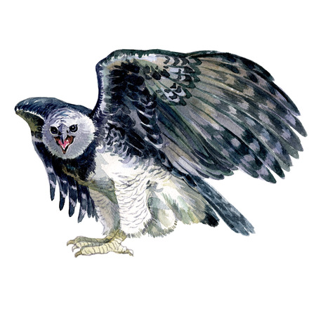 Watercolor owl bird screaming isolated on a white background illustration.