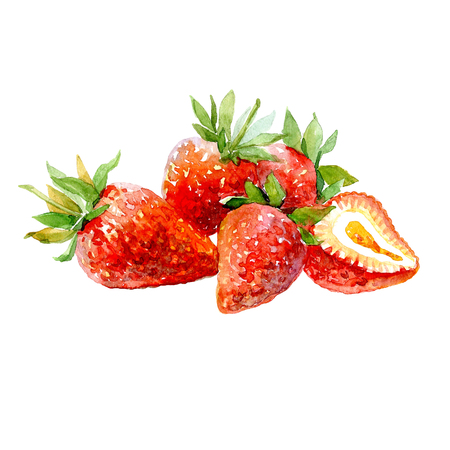 Watercolor strawberry and sliced ??strawberries isolated on a white background illustration.
