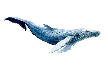 흰색 배경 그림에 고립 수채화 흰색 고래입니다. 스톡 콘텐츠