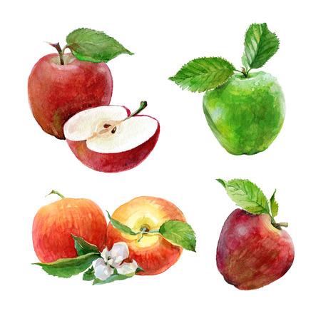 흰색 배경에 수채화 녹색 및 빨강 사과의 집합입니다. 얇게 썬 과일 ?? 껍질을 벗 겨 반쪽 사과. 빨간 사과 그림입니다. 스톡 콘텐츠