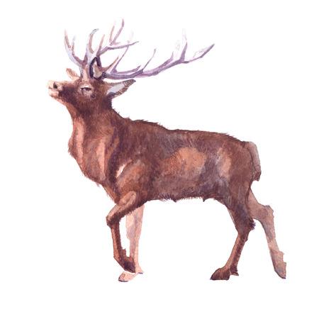 수채화 사슴 포리스트 동물 그림 흰색 배경에 고립.