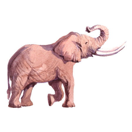 수채화 현실적인 코끼리 열 대 동물 그림 흰색 배경에 고립입니다.
