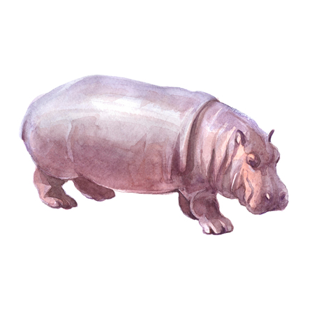 Watercolor realistic hippopotamus tropical animal isolated on a white background illustration. Фото со стока