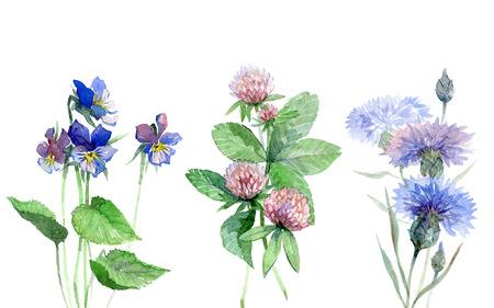 야생화는 바이올렛, 클로버, 수레 국화 설정 수채화. 산 꽃입니다. 설정 꽃 초원.
