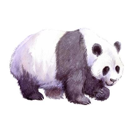 흰색 배경 그림에 격리 수채화 현실적인 팬더 동물 일러스트입니다.