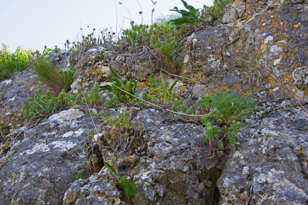 Grey mountain rocks with green plants, spring time, Spain