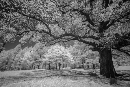 infrared: meadow and trees infrared Stock Photo