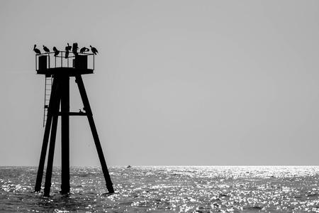 brown pelicans on an ocean buoy