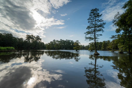 swampy: lake and swamp in South Carolina Stock Photo