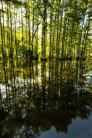 soggy: swamp Stock Photo