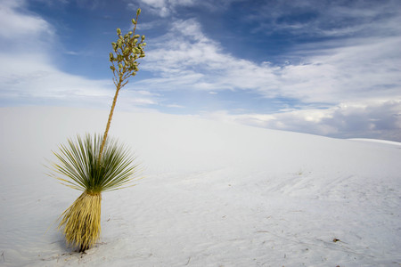alamogordo: White Sands