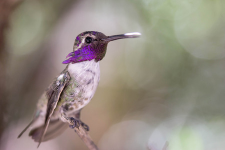 high frequency: hummingbird Stock Photo