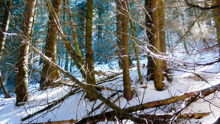 hiking trail: hiking trail and forest in deep winter Stock Photo