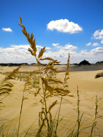 nags: sand dune with marsh grass in the foreground