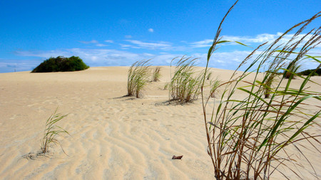 sand dune with grass in the foreground