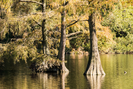 swampy: a swamp in South Carolina with reflections of fall colors