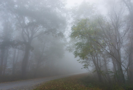 early morning: early morning fog in the forest on Skyline Drive in the Virginia Appalachians