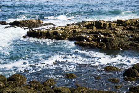 rocky coastline: rocky coastline with crashing waves and seagulls Stock Photo