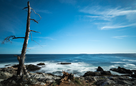 rocky coastline: rocky coastline with a dead tree in the foreground