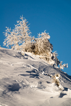 snow covered trees in a winter landscape in the Swiss Alps