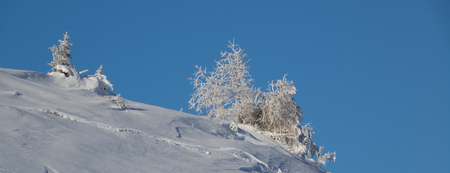 snow-covered trees in deep winter in the Swiss Alps
