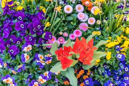 close up of a collection of decorative flowers in a flower pot in the spring