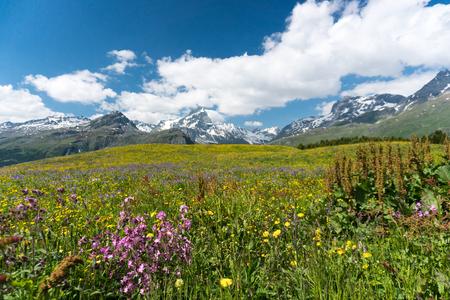 Idyllic mountain landscape in the summertime