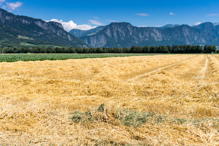 farm fields with fresh cut yellow straw and mountain landscape behind