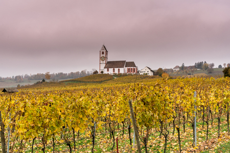 picturesque white country church surrounded by golden vineyard pinot noir grapevine landscape under a cloudy purple evening sky Imagens