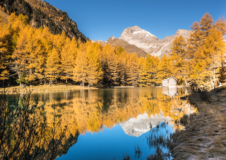 yellow larch trees and mountain lake with reflections in late autumn Banco de Imagens