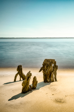 vertical view of beach and coastal seascape with old tree stumps in the sand