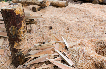 outdoor workshop for lumberjack and forest warden to cut wood and wedges with wood shavings on the ground in the forest Stock Photo