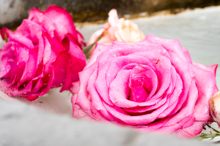 floral arrangement of pink roses in the basin of an old stone fountain close up view